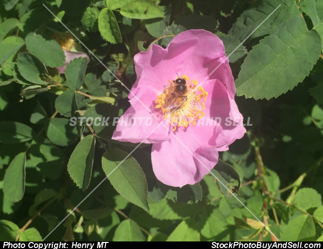 flower with honey bee