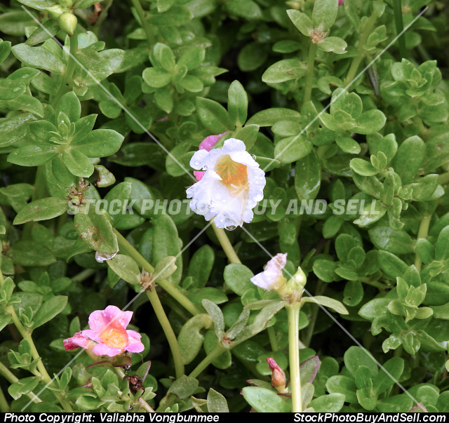 Stock photo - small flowers