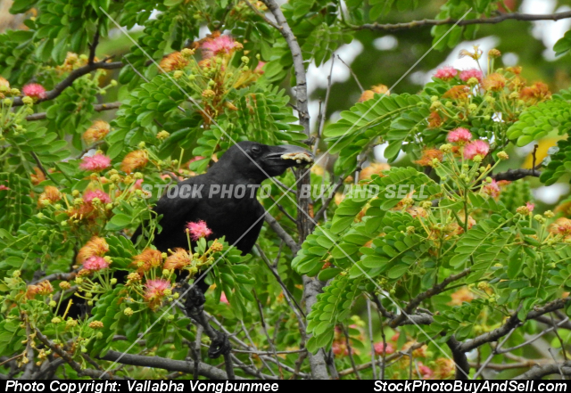 Stock photo - crow & flower