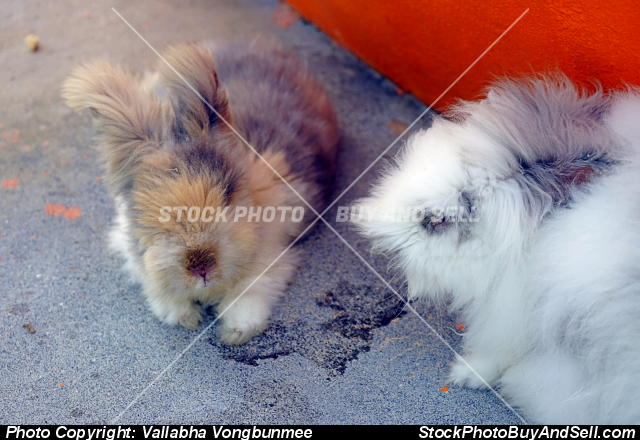 Stock photo - rabbits