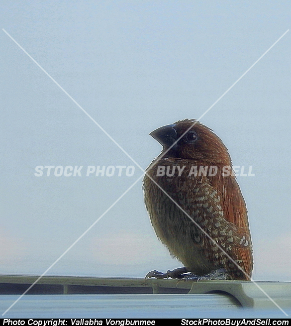 Stock photo - warbler