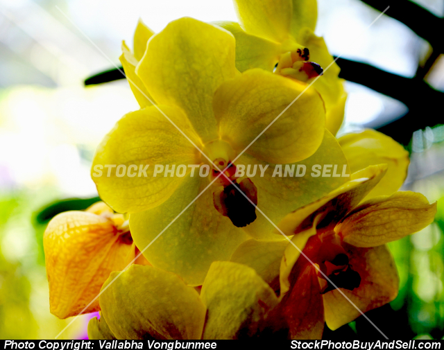 Stock photo - orchid