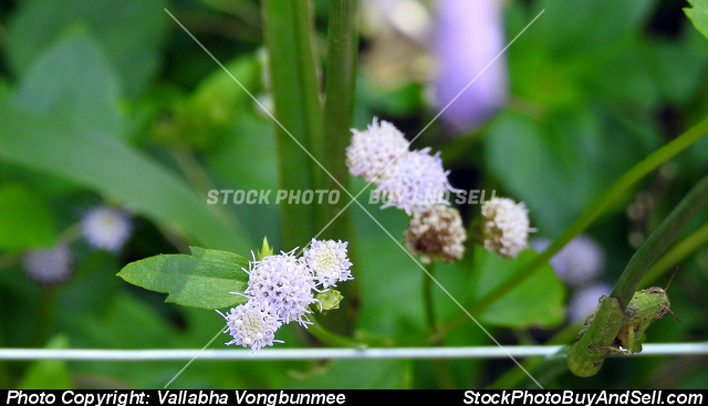 Stock photo - flower