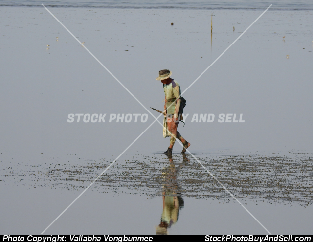 Stock photo - shellfish seeker