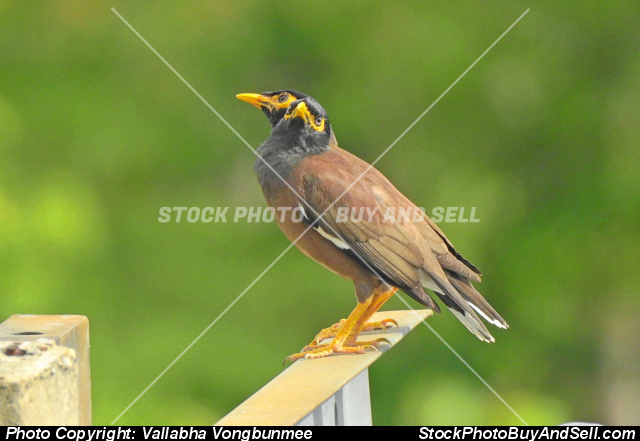 Stock photo - bird