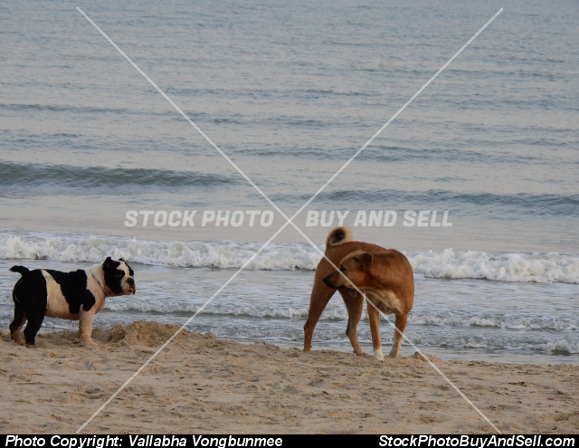 Stock photo - dogs