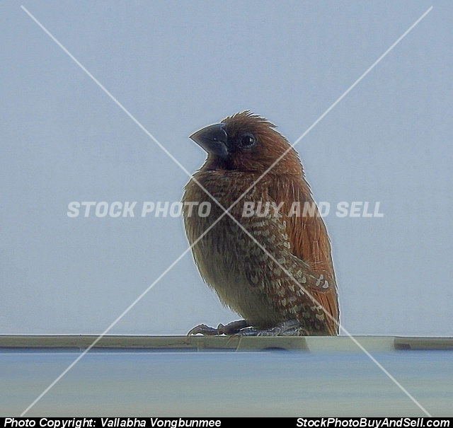 Stock photo - finch