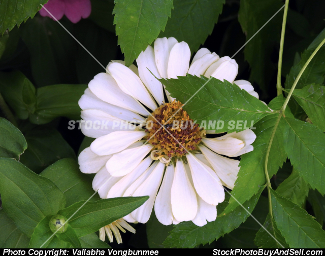Stock photo - flower & insect