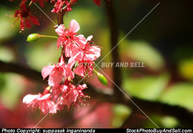Stock photo - Beautiful flowers are blooming.