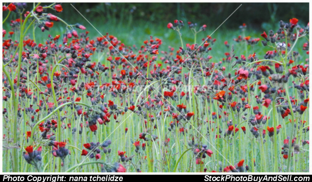 Stock photo - Flowers in the meadow