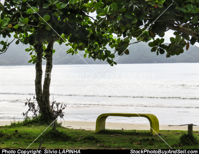 View of the beach with bench and tree in the foreground. Ubatuba , Brazil.