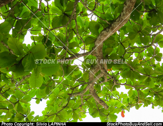 Branches with green leaves against the sky