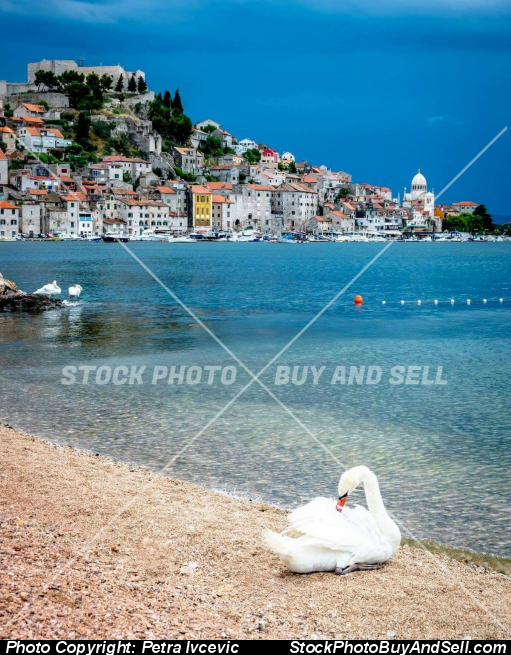 Stock photo - Šibenik swan